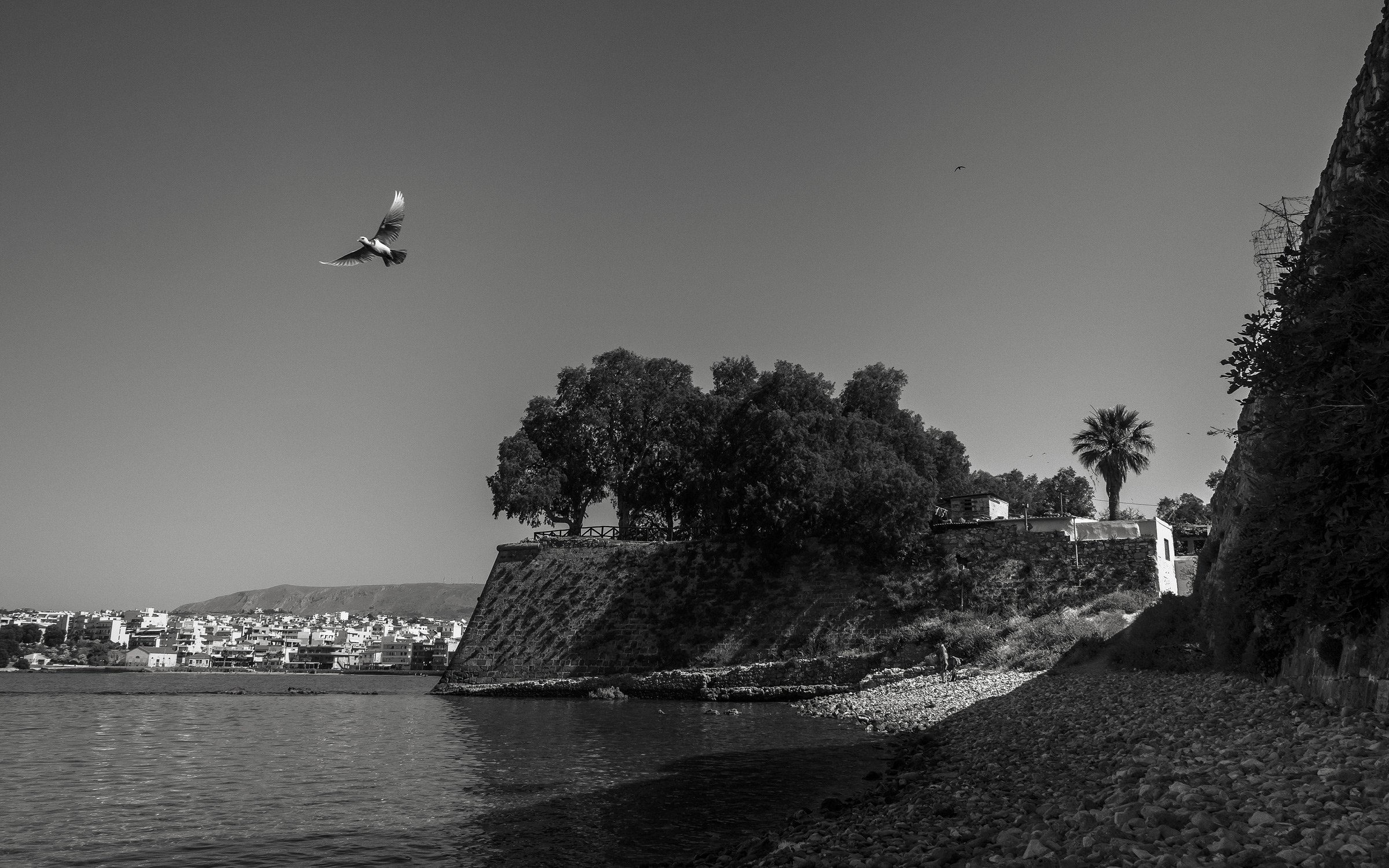 Birds-Of-Chania_02