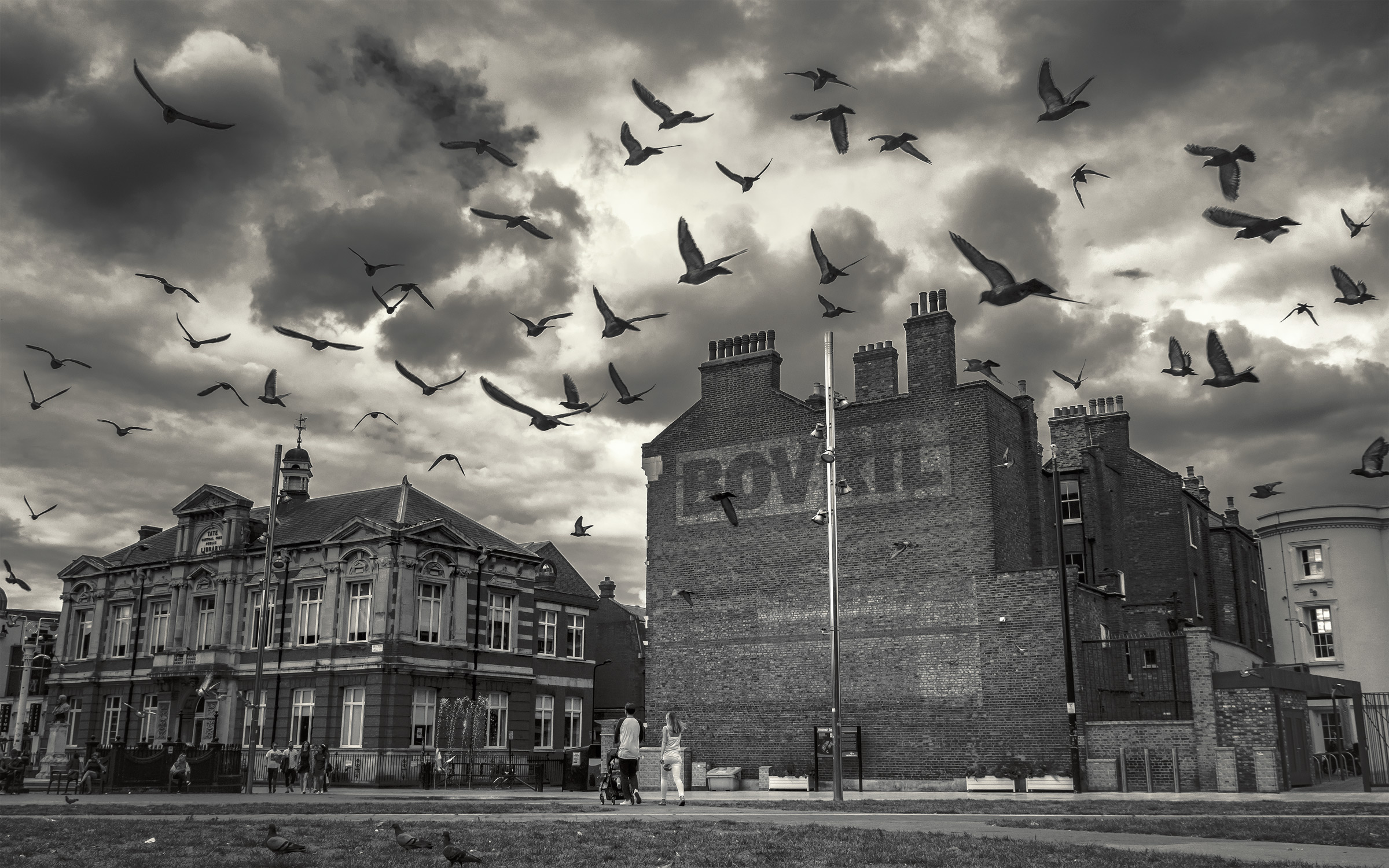 Birds-Of-Brixton