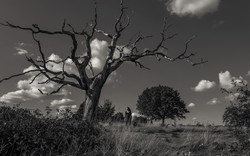 The-Tree-The-Woman-and-The-Sky_01