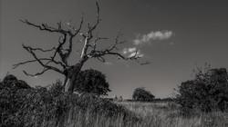 The-Tree_02