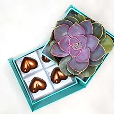 ChocoFLOWER - Bombons de Nutella