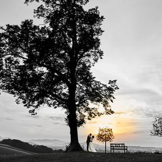Hochzeitpaar unter großem Baum im Abendhimmel