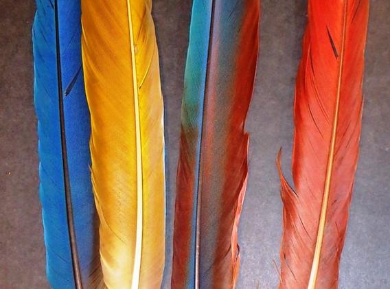 Macaw tails