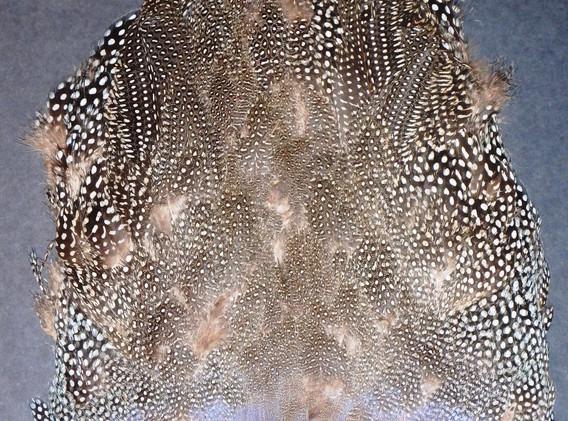 Gallina or Guinea whole skin