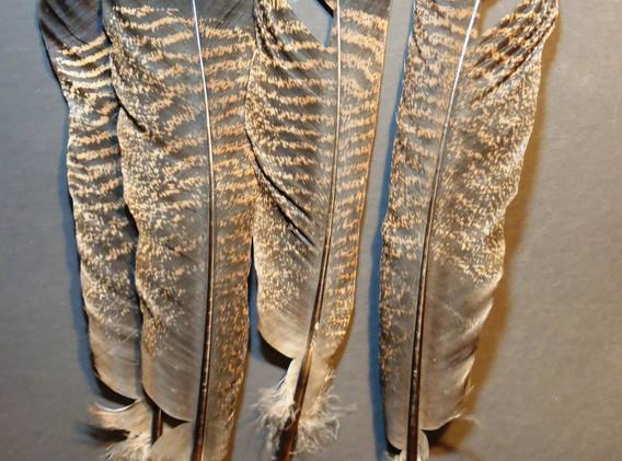 White tip turkey tail
