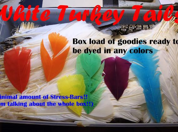 White turkey tails