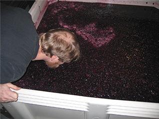 Monitoring fermentation...