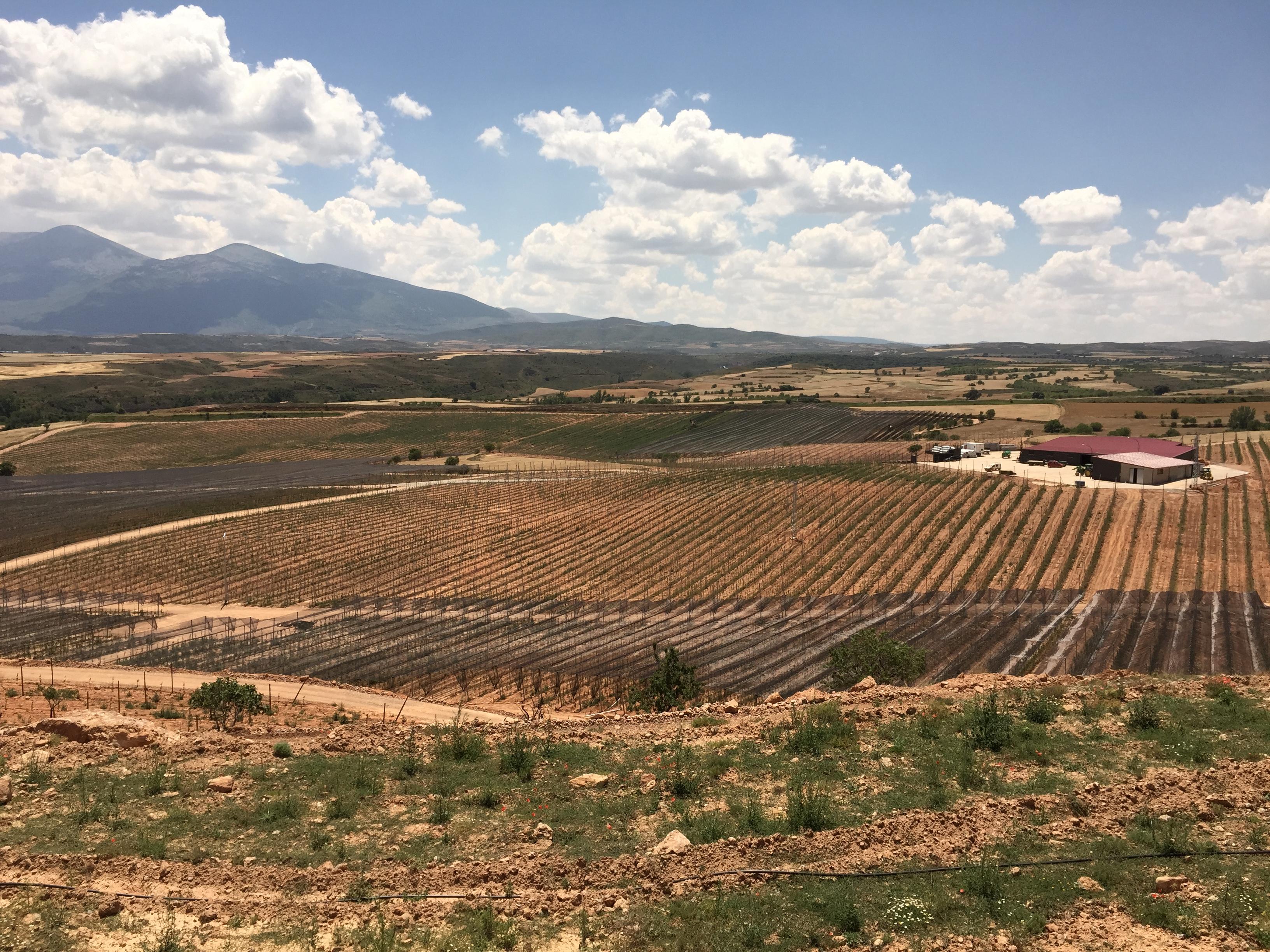 Nueva plantación de manzano