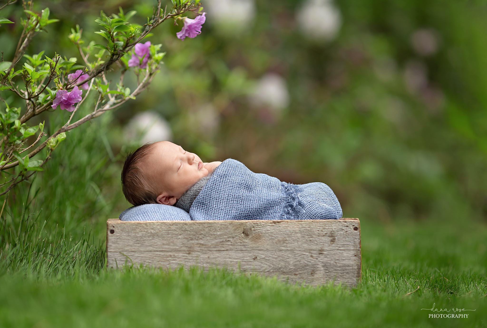 Grosse Pointe Outdoor Newborn Photo