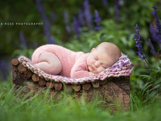 Summer's Magic | Grosse Pointe Newborn Photograher