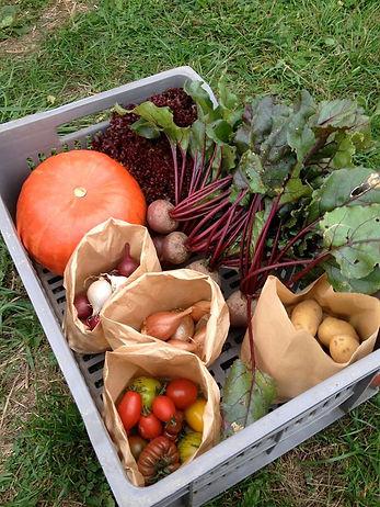 Panier de légumes type disonible à la Ferme de TANGA