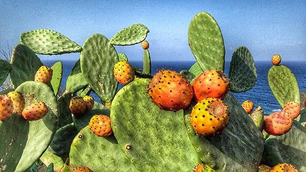 #ficodindia #linosa #island #sicily #med