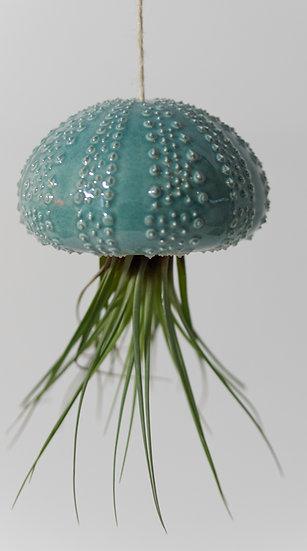 Oursin S et son tillandsia (plante)