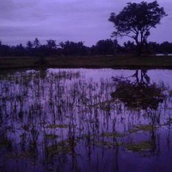 peliatan, ubud, bali__nah ist_und schwer zu fassen der Gott._wo aber Gefahr ist, wächst_das Rettend