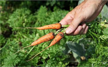 Natural farming 自然農法