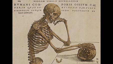 thinking skeleton.png