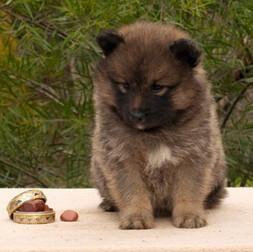 Flicka Puppy