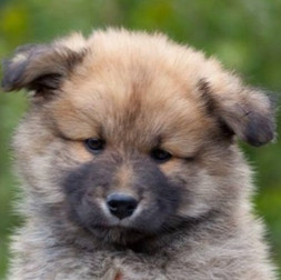 Puppy C