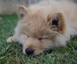 Finn Puppy