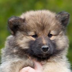 Puppy D