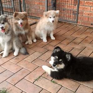 melissa waters 4 puppies.jpg