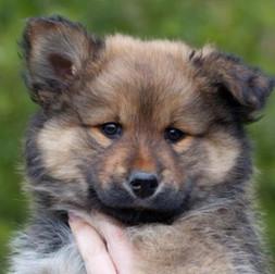 Puppy B