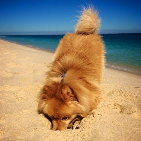 Finn at the beach