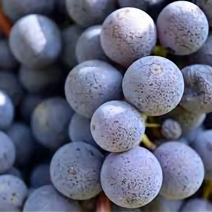 VIRTUAL WINE TASTING: The Many Faces of Nebbiolo