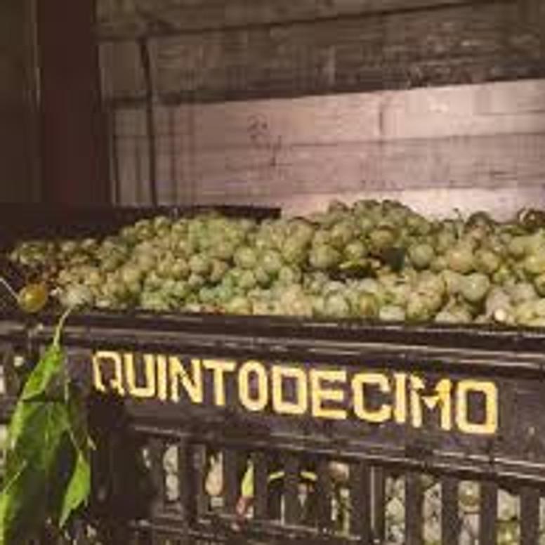 Virtual Winter Tasting of Quintodecimo