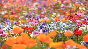 fleurs.jpeg