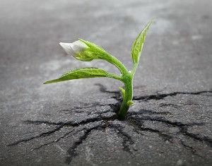 comment-une-plante-peut-elle-percer-asph