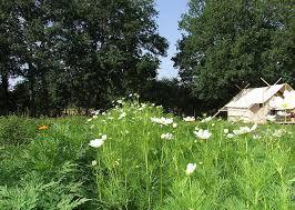 Marlière-jardin2.jpg