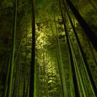 tree-nature-forest-branch-light-night-61