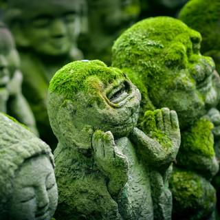 tree-grass-plant-leaf-moss-travel-137486