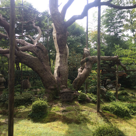 Kyoto de l'intérieur