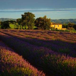 landscape-nature-grass-plant-field-farm-