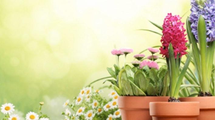 Detox Emocional: Colorindo para diminuir o estresse