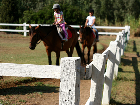 Finding the Right Lesson Horse for your Program