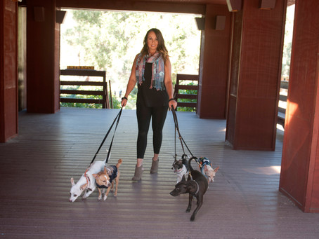Dog Walking Trends...are they safe?