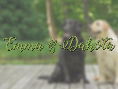 Labrador Retriever Outdoor Photo Session   Medina, Ohio Dog Photography