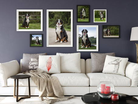 What should I do with my photos after they're taken? | Massillon, Ohio Dog Photography