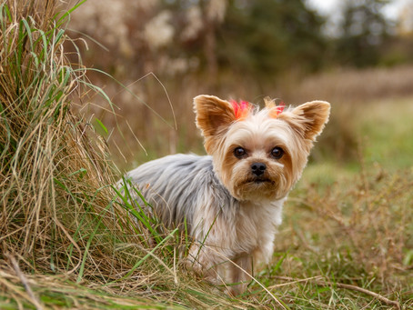 5 Tips to Take Better Cell Phone Pics of Your Pets | Massillon, Ohio Pet Photography