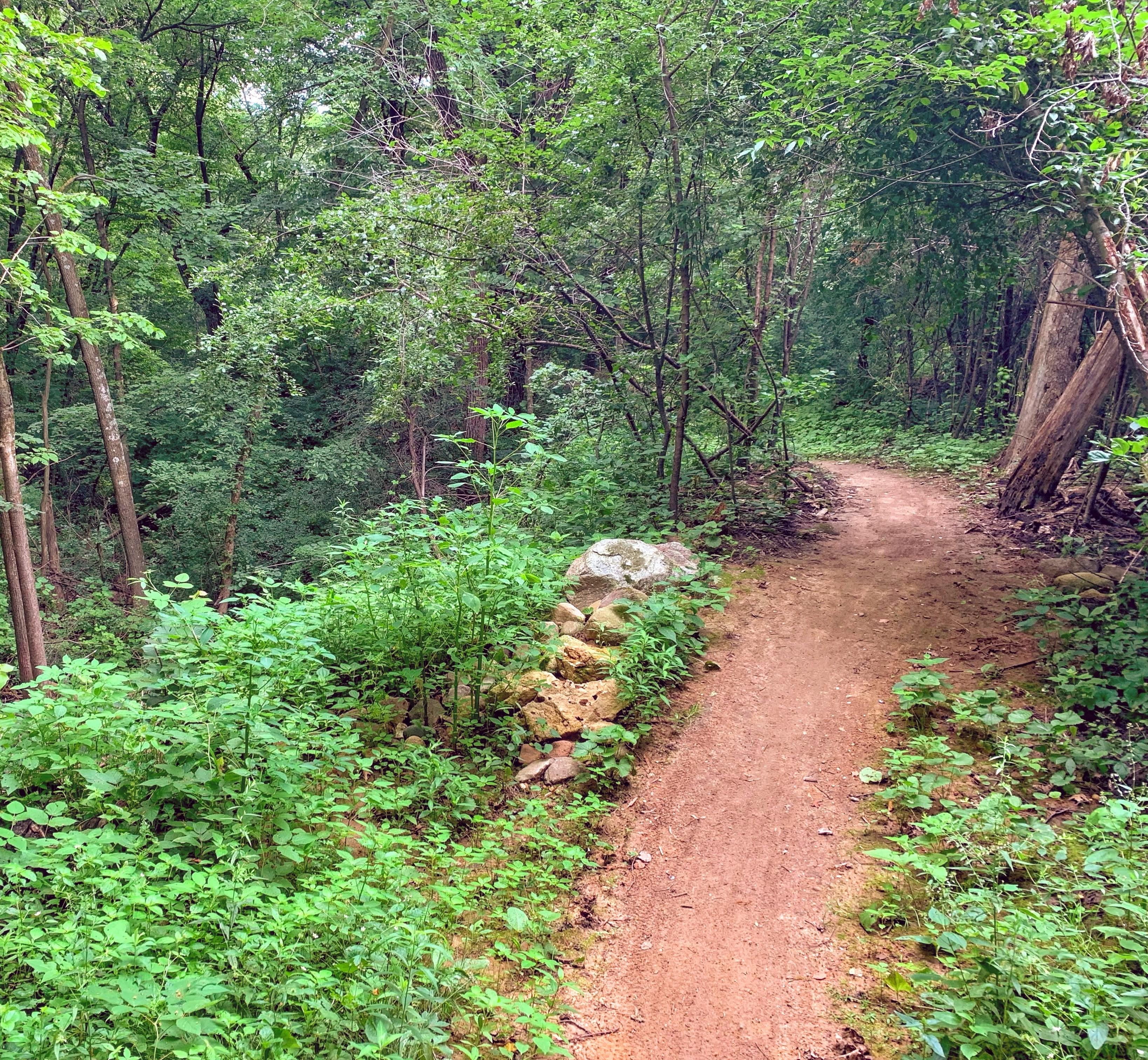trail rehabilitation _Middleton