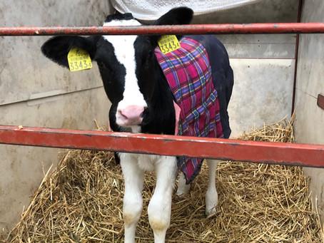 牛着コレクション2020
