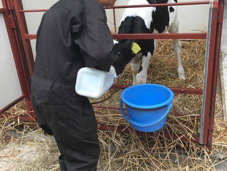 酪農体験の受付はじめています
