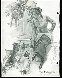 Vintage Print Illustration Jack Russell Dogs Harrison Fisher