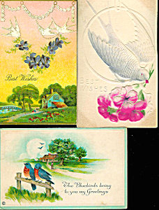 Antique Greeting Postcards: Lot Of 3 : Birds & Flowers
