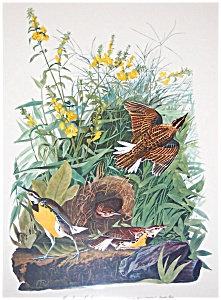 Vintage Audubon Prints: Birds & Nature: Meadow Lark