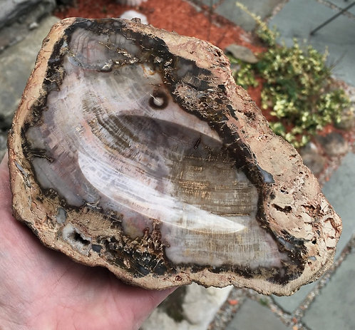 """6.75"""" Agatized, Fossilized, Petrified Wood Bowl - Strong Earth Energy"""