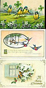 Antique Greeting Postcards: Lot Of 3 : Birds, Shamrocks